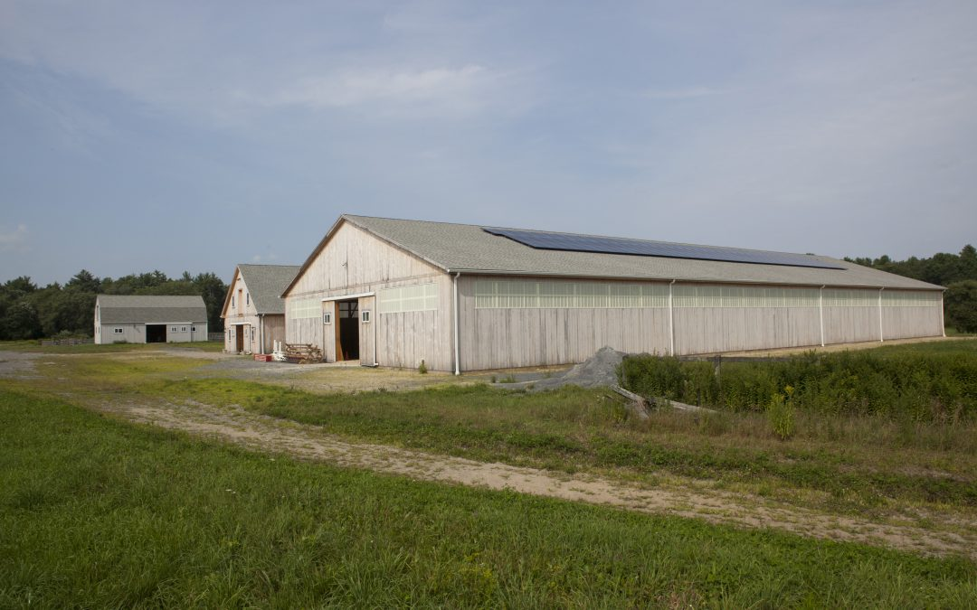 Barn & Shed Siding
